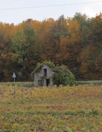 photos-automne-2015_1080